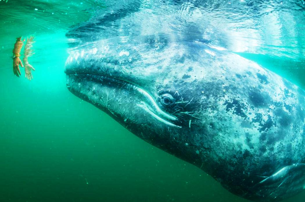 миграция-китов-в-юар